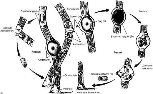 protists  u0026 algae