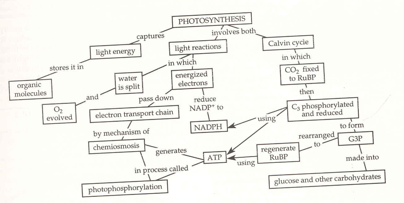 Lecture notes photosynthesis and energy photosynthesis an excellent review photosynthetic antennas advanced information how a rainbow is formed the light reaction detailed but most useful pooptronica Choice Image